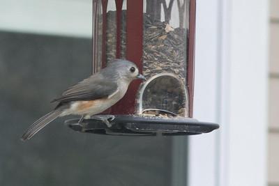 birds-8753