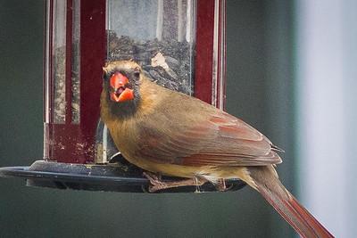 birdfeeder-9161