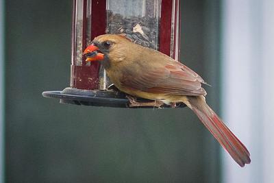birdfeeder-9159