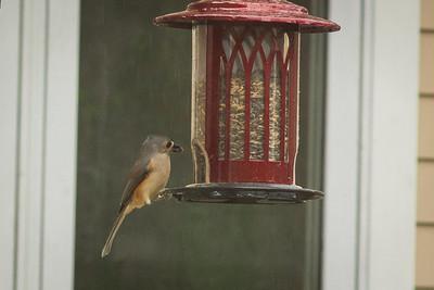 birds-8692