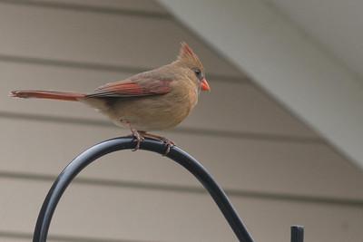 birds-8720