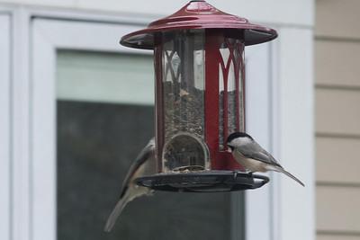 birds-8766