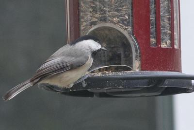 birds-8723
