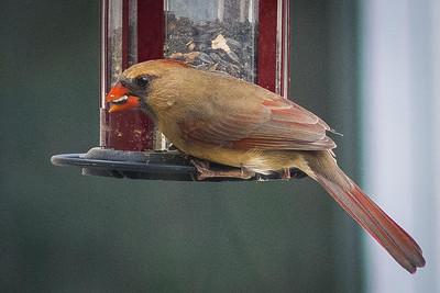 birdfeeder-9173