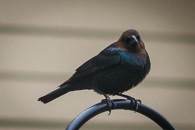 bird-9052