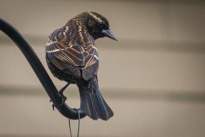 bird-9048