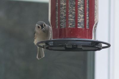 birds-8750