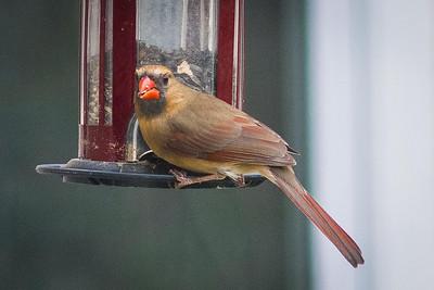 birdfeeder-9168