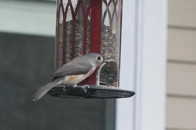 birds-8756