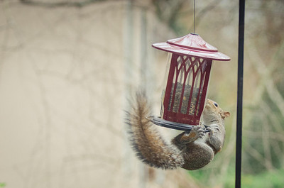 squirrel-4822