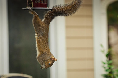 squirrel-4801