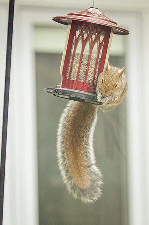 squirrel-4763