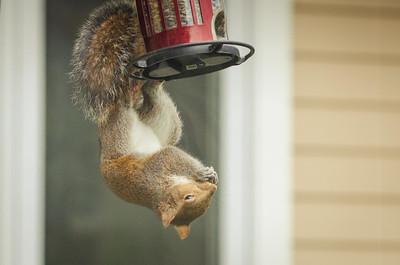 squirrel-4782