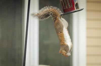 squirrel-4757