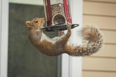 squirrel-8794