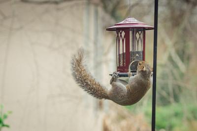 squirrel-4821