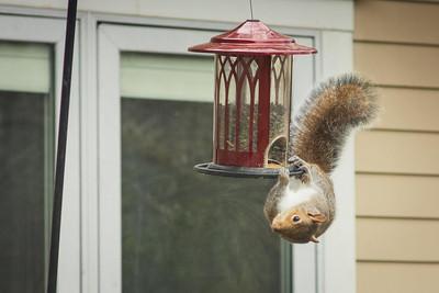 squirrel-8853