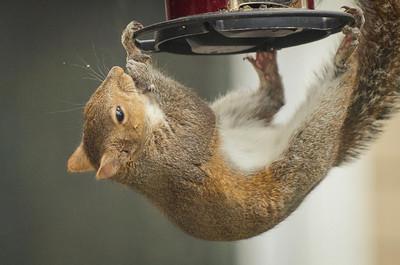 squirrel-4744