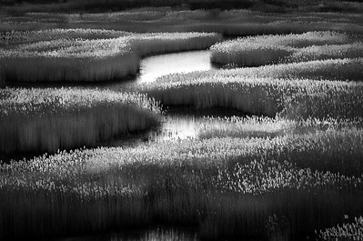 Winter Marsh #3