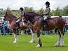 Ridden Clydesdale Horses - Glasgow Festival