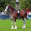 Ridden Clydsdale - Glasgow Festival