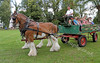 Glasgow Show - Clydesdale Horse Drawn Carriage - Glasgow Green - 30 July 2011
