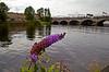 Buddleia Flower at Glasgow Waterfront - 20 August 2013