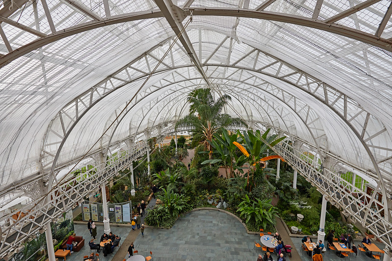Winter Gardens in the People's Palace in Glasgow - 21 October 2018