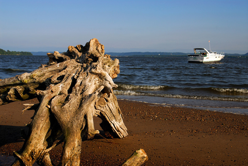 SE - Lake Pepin drift wood - 01