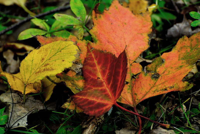 Fall Color - Kathio State Park