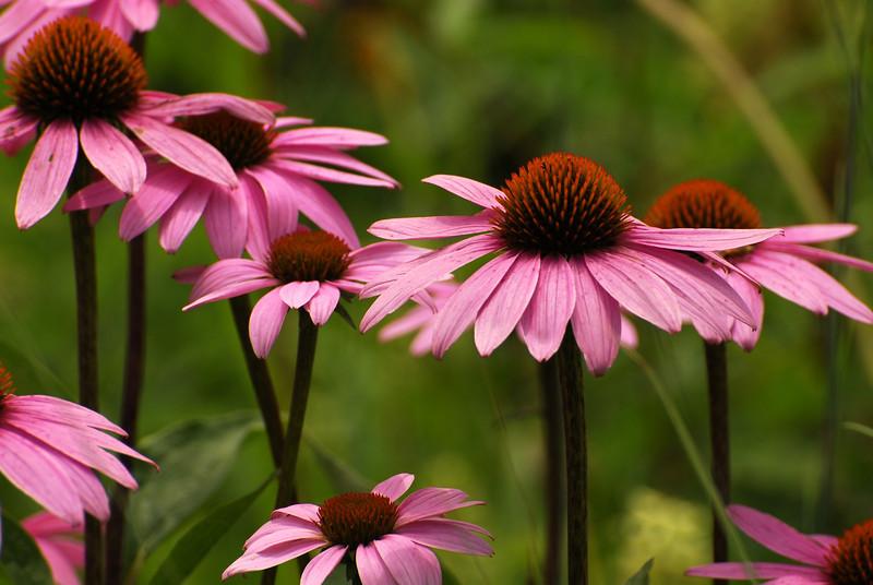Flower - 07