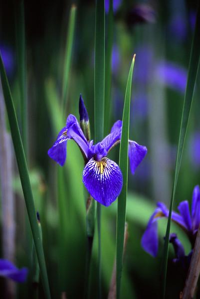 Flower - 06