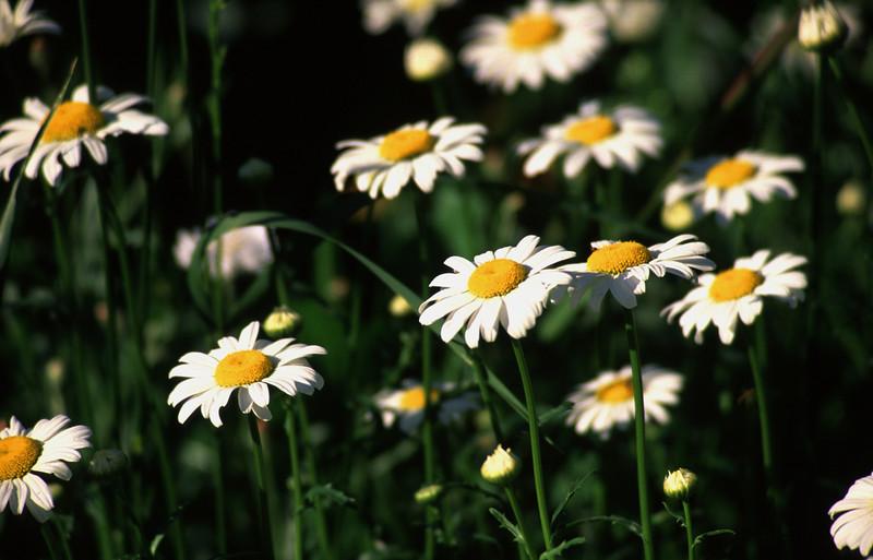 Flower - 16