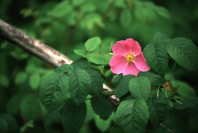 Flower - 14