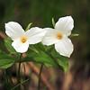 Flower - 13