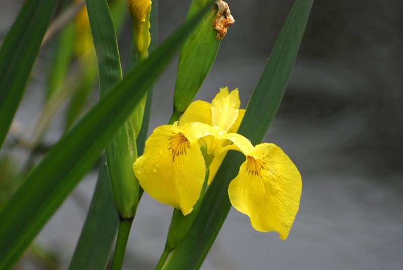 Flower - 15