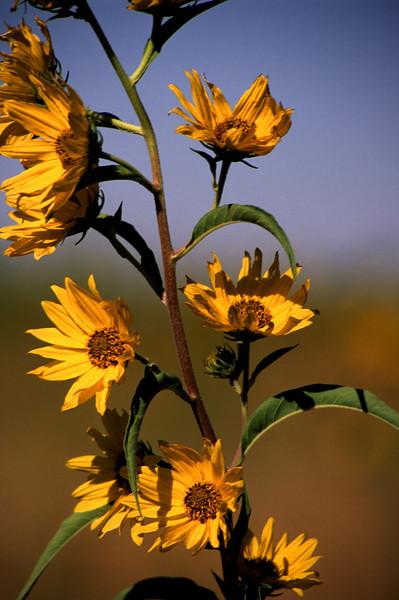 Flower - 09