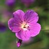 Flower - 01
