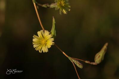 flowers-5058