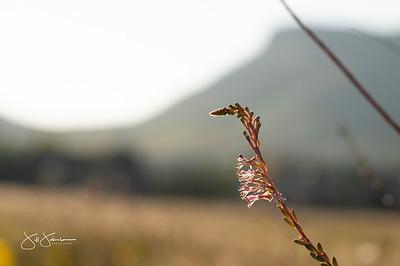 flowers-5076