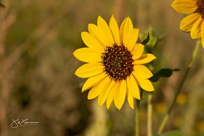 flowers-5039