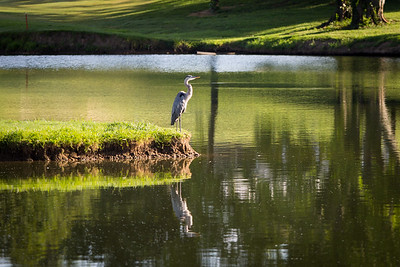 Golf Tournament 060933
