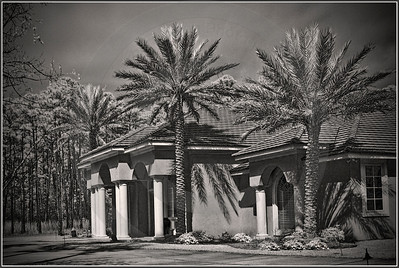 Plantation Palms infrared