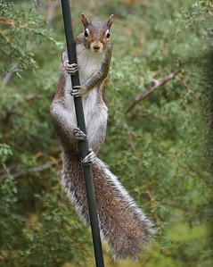 Pole Dancer!!