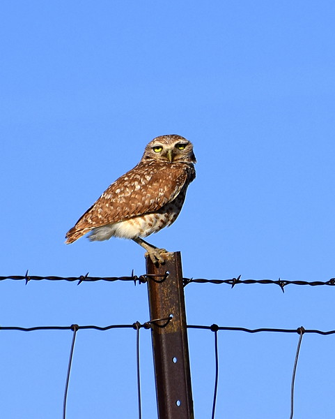 I've always wanted to see one of these cute little owls and I finally found one!! Its gonna be a great day..its my Birthday and my great nephew is being born today!!