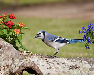 Birds and Blooms!!