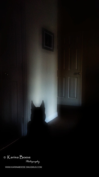 Day 76 - Batman?<br /> Sun. January 12, 2014<br /> <br /> I woke up this morning and thought Batman was in the room.
