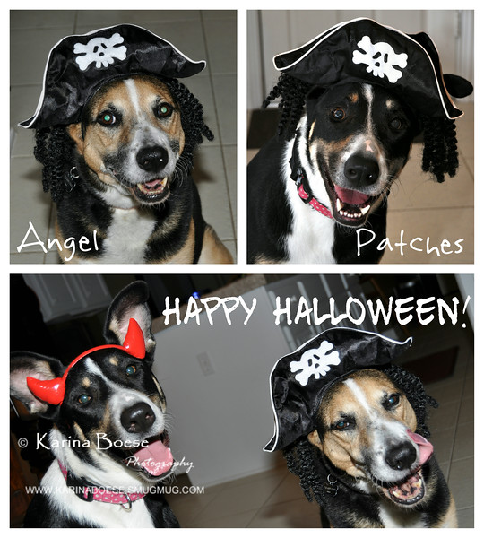 Day 24 - Happy  Halloween!<br /> Thu. October 31, 2013<br /> <br /> They love their treats!