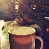 Day 329 - Morning Coffee<br /> Sun. October 15, 2017