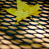 Fallen<br /> Wed. August 11, 2010 (Day 73)<br /> <br /> This one was taken at Huntsville State Park last Sunday. <br /> Just a quick shot of the fallen leaf on our picnic table. <br /> <br /> Tiny info:<br /> * D50 and 50mm f/1.8.<br /> * added vignette in LR.